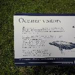 Bridgewater Bay Australia Seal conlony