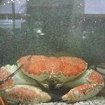 Melbourne Australia Giant Crab @ Casino
