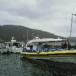 The Tasman Island Charter Cruise