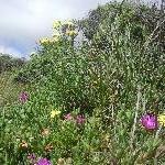 Pink tasmanian wild flowers