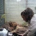 Tasmanian Devil feeding tour