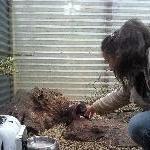 Tasmanian Devil puppies!