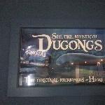 Photos of the Dugongs at the Sydney Aquarium Australia Blog Sharing