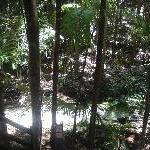 Wanggoolba Creek Fraser Island