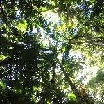 Palms rainforest Fraser Island, Hervey Bay Australia