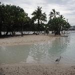 Brisbane Swimming Lagoon