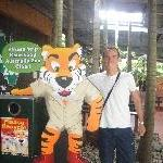 The Tazzie Tiger at Australia ZOO, Beerwah Australia