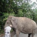 Steve Irwins Elephants at the ZOo, Beerwah Australia