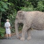 Elephant Feeding at Australia Zoo