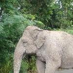 Cute elephants at the Beerwah Zoo