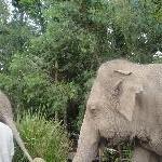 Elephants mummy and little one