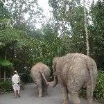 Elephants holding hands