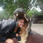 The jaws of a 16 m Croc!