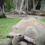 Steve Irwins giant turtle paradise