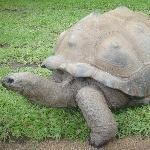 Eating Giant Turtles