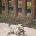 Lizard encounter at the Australia Zoo