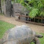 Turtle Garden in Beerwah