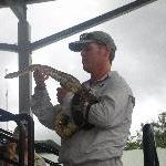 Snakes cuddling at Australia Zoo
