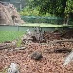 The Steve Irwin Australia Zoo in Beerwah, Queensland Travel Album