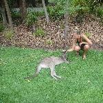 The Steve Irwin Australia Zoo in Beerwah, Queensland Travel Gallery