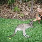 The Steve Irwin Australia Zoo in Beerwah, Queensland Information