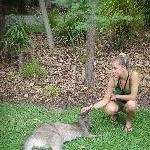 The Steve Irwin Australia Zoo in Beerwah, Queensland Picture Sharing