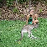 The Steve Irwin Australia Zoo in Beerwah, Queensland Vacation Tips