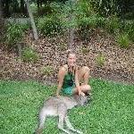 The Steve Irwin Australia Zoo in Beerwah, Queensland Travel Blog