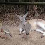 The Steve Irwin Australia Zoo in Beerwah, Queensland Album Photos