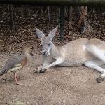 The Steve Irwin Australia Zoo in Beerwah, Queensland Blog Information