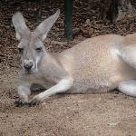 The Steve Irwin Australia Zoo in Beerwah, Queensland Vacation Information