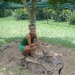 The Steve Irwin Australia Zoo in Beerwah, Queensland Holiday Pictures