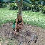 The Steve Irwin Australia Zoo in Beerwah, Queensland Diary Sharing
