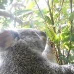 The Steve Irwin Australia Zoo in Beerwah, Queensland Travel Photos