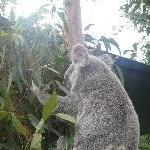 The Steve Irwin Australia Zoo in Beerwah, Queensland Holiday Review