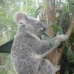 The Steve Irwin Australia Zoo in Beerwah, Queensland Diary Tips