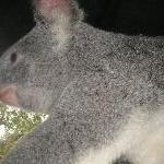 The Steve Irwin Australia Zoo in Beerwah, Queensland Trip Photographs