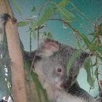 The Steve Irwin Australia Zoo in Beerwah, Queensland Travel
