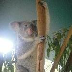 The Steve Irwin Australia Zoo in Beerwah, Queensland Experience