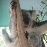 The Steve Irwin Australia Zoo in Beerwah, Queensland Trip Review