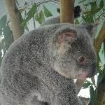 The Steve Irwin Australia Zoo in Beerwah, Queensland Blog Pictures