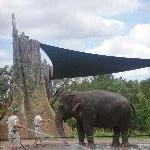 The Steve Irwin Australia Zoo in Beerwah, Queensland Photo