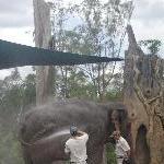 The Steve Irwin Australia Zoo in Beerwah, Queensland Review