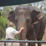 The Steve Irwin Australia Zoo in Beerwah, Queensland Trip Picture