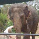 The Steve Irwin Australia Zoo in Beerwah, Queensland Travel Photographs