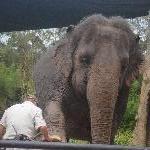 The Steve Irwin Australia Zoo in Beerwah, Queensland Blog