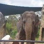 The Steve Irwin Australia Zoo in Beerwah, Queensland Photo Sharing