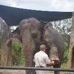 The Steve Irwin Australia Zoo in Beerwah, Queensland Trip Adventure