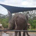 The Steve Irwin Australia Zoo in Beerwah, Queensland Review Photo