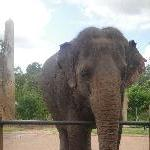 The Steve Irwin Australia Zoo in Beerwah, Queensland Travel Diary